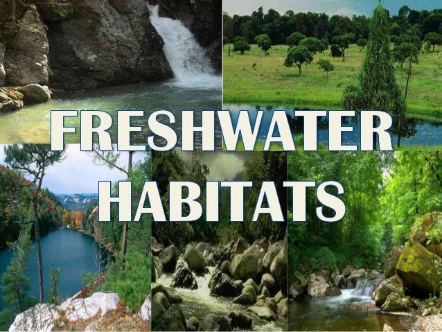 Freshwater habitats is defined as having a low salt concentration It is usually less than 1%. Limnology It is the study of...
