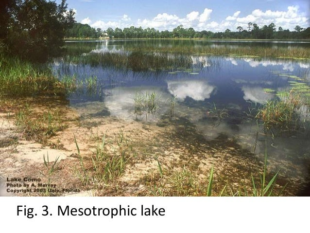 freshwater ecosystems essay Environmental health of freshwater ecosystems is designed to give graduate students  these are open-book essay quizzes you can substitute this quiz grade if it is.