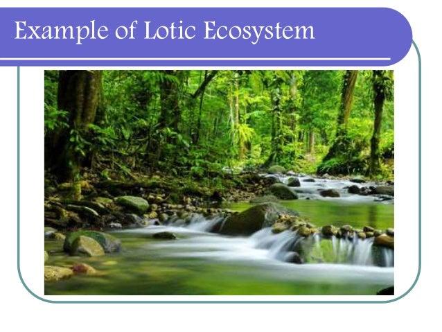Freshwater Ecosystem