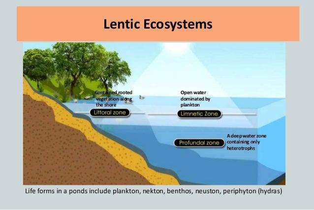 Freshwater ecosystem (2)