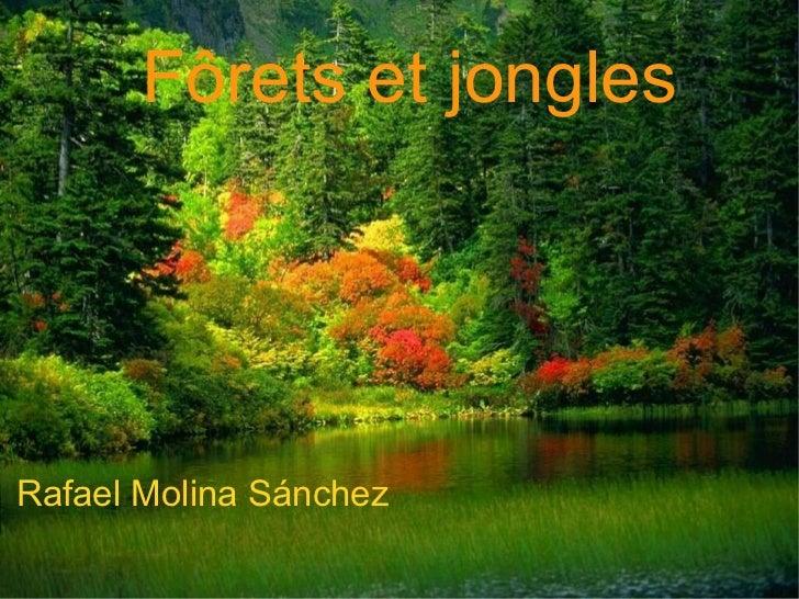 Rafael Molina Sánchez Fôrets et jongles