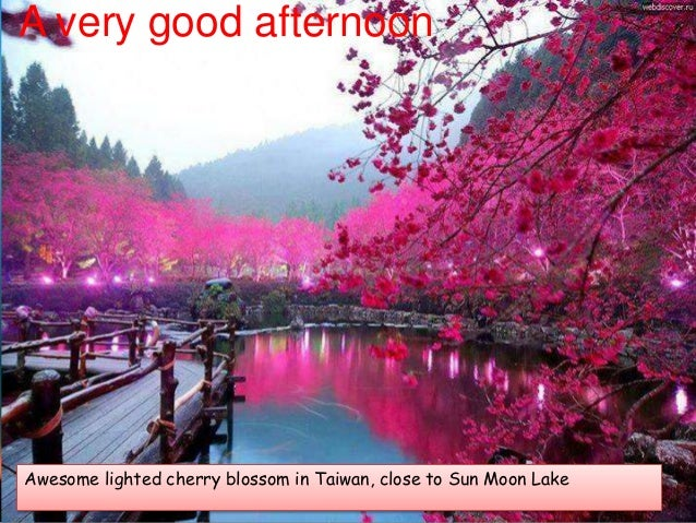 A very good afternoon Awesome lighted cherry blossom in Taiwan, close to Sun Moon Lake