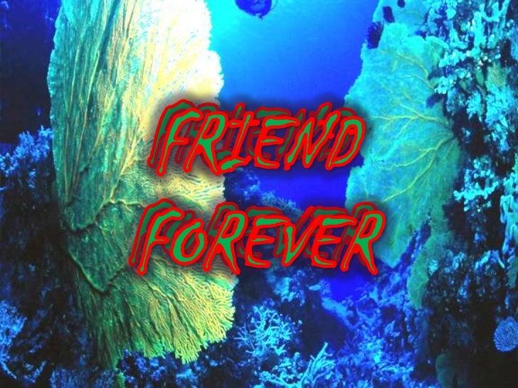 FRIEND  FOREVER<br />FRIEND  FOREVER<br />