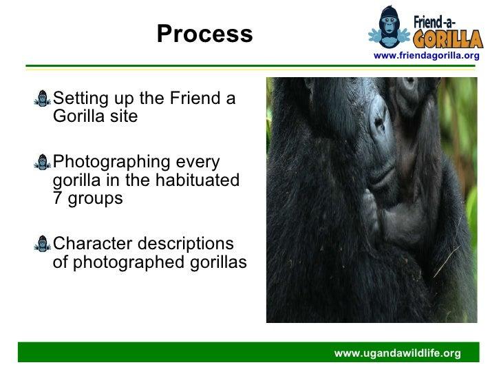 Land Gorilla in the Press