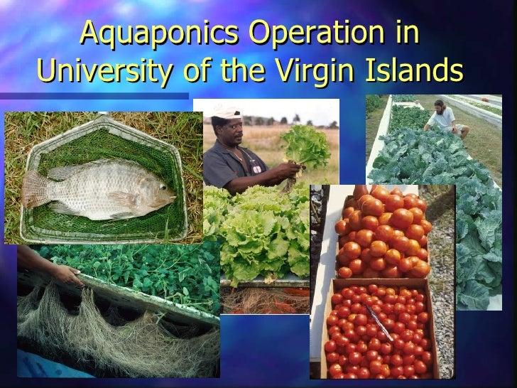 Friendly Aquaponics: the basics of the system