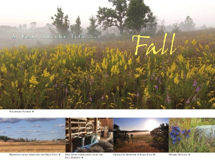 Fall A         Ye a r           i n         t h e       l i f e . . .FOG   BEFORE   SUNRISE ✜BROWNING   GRASS DOMINATES TH...