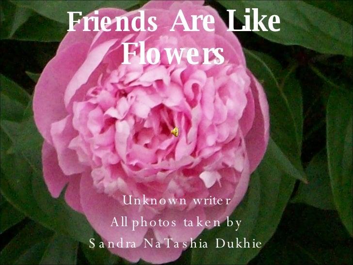 Friends  Are Like Flowers Unknown writer All photos taken by Sandra NaTashia Dukhie