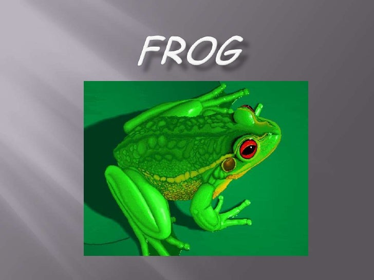 frog<br />