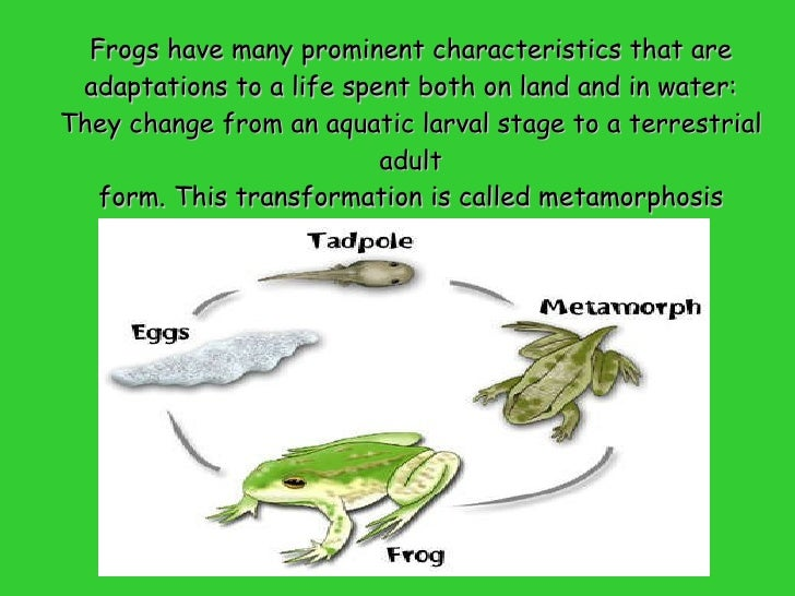 Frog Anatomy and morphology
