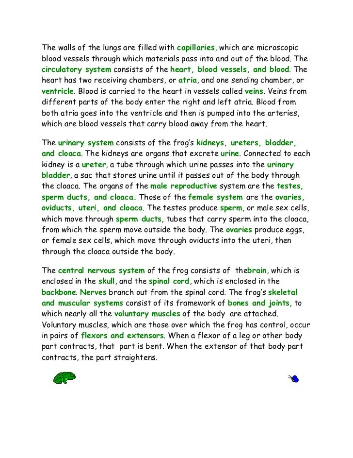 frog dissection essay The researcher of this essay aortic dissection aims to analyze aortic dissection which refers to a type as an external structure of leopard frogs consist of.