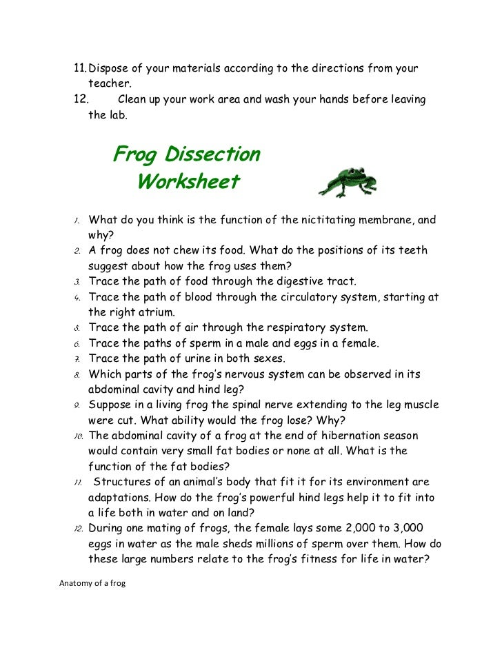 Frog and taod dissection – Frog Dissection Worksheet