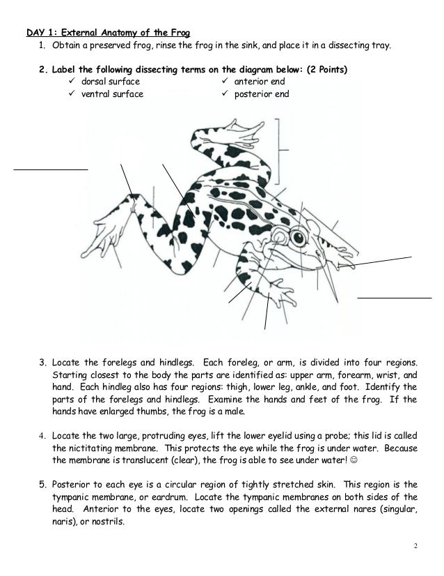 BIOLOGY FROG DISSECTION LAB – Frog Anatomy Worksheet