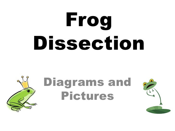 Frog Dissection<br />Diagrams and Pictures<br />