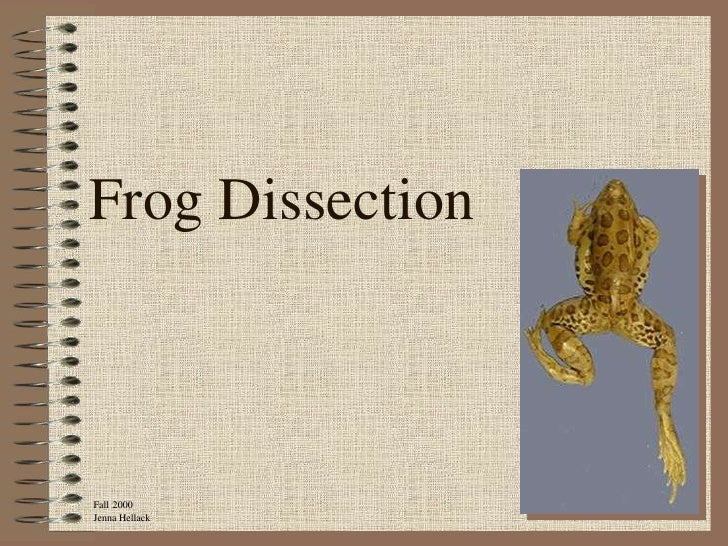 Frog DissectionFall 2000Jenna Hellack