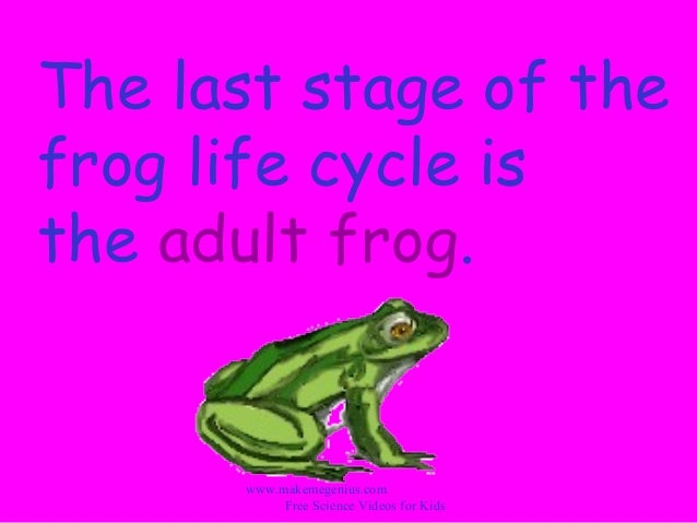 the life cycle of a frog essay Essay vocabulary academic ielts writing task 1 sample 94 - life cycle of the silkworm and the stages in the production of silk cloth details last updated: saturday, 21 october 2017 15:32 written by ielts mentor hits: 45555 ielts academic writing task 1/ graph writing - diagram/ a process: » you should spend about 20 minutes on this task the diagrams below show the life cycle.