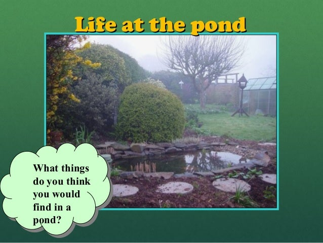 Life at the pondLife at the pondWhat thingsdo you thinkyou wouldfind in apond?