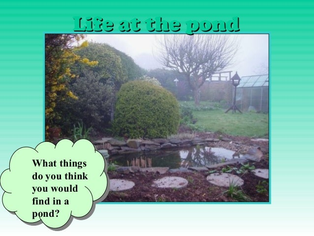 Life at the pondWhat thingsdo you thinkyou wouldfind in apond?