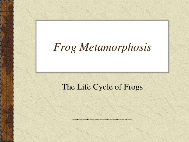 Frog Metamorphosis The Life Cycle of Frogs