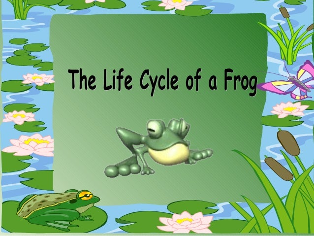 Today we aregoing to look atthe life cycle ofa frog. Thispicture showsthe differentstages ofdevelopment.Let's have a close...