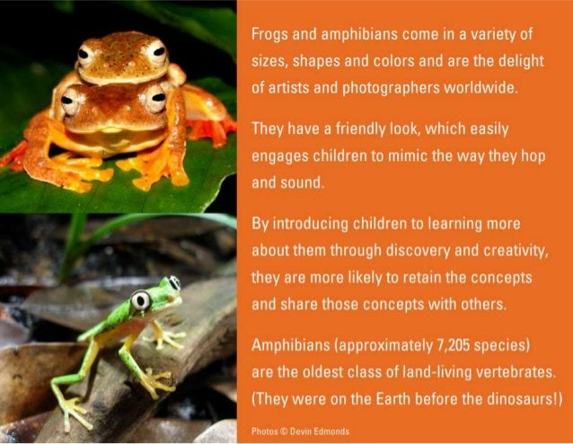 Frogs and amphibians come in a variety 01'  sizes,  shapes and colors and are the delight of artists and photographers wor...