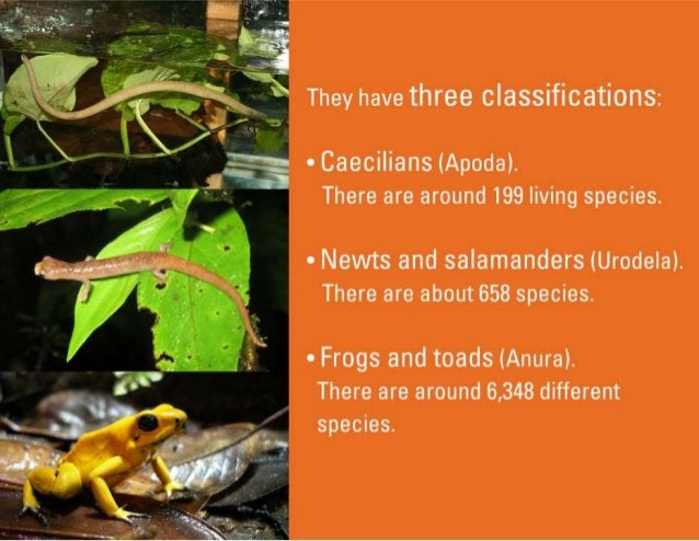 They have three classifications:   A Caecilians (Apoda).  There are around 199 living species.   ~» Nevvts and salamanders...