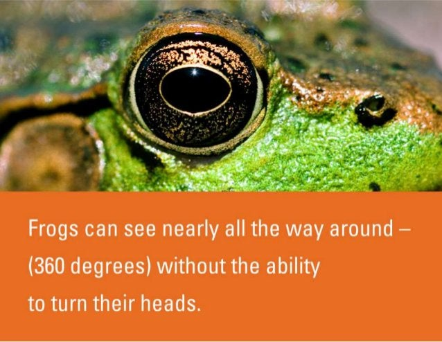 Frogs can see nearly all the way around — (360 degrees) without the ability to turn their heads.