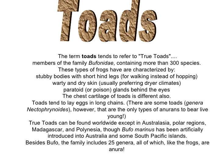 """Toads The term  toads  tends to refer to """"True Toads"""".... members of the family  Bufonidae , containing more tha..."""