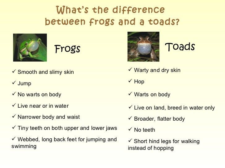 Frog Vs Toad Venn Diagram Yelomdiffusion