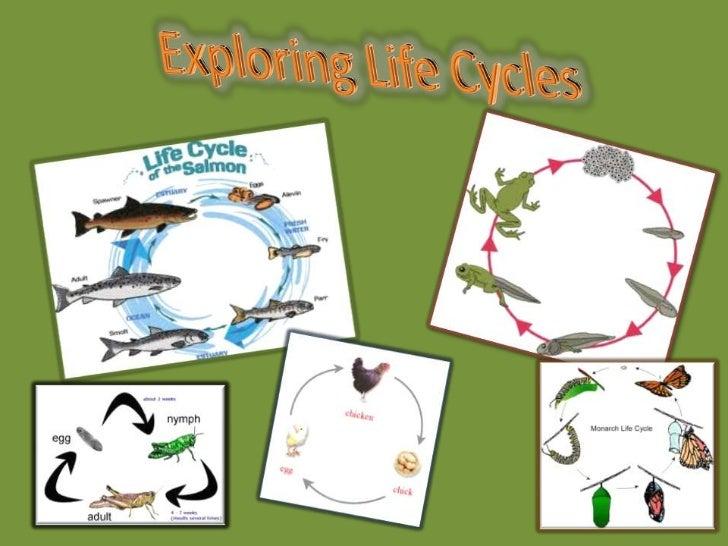 Exploring Life Cycles<br />
