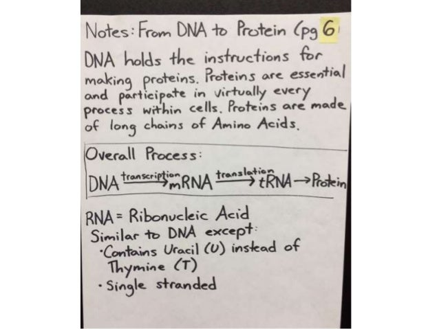 Notesi Ffom DNA +0 Protein (pg     'lhe lns+ru<~. 'l'i'ons {Er Making Proteins,  Pt-o'l'ein5 are essenflal and Po»r'liciPo....