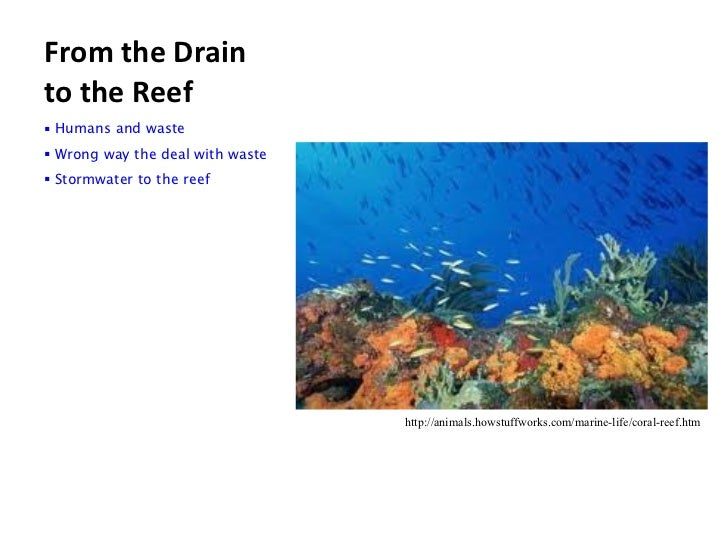 From the Drain to the Reef <ul><li> Humans and waste </li></ul><ul><li> Wrong way the deal with waste </li></ul><ul><li> S...