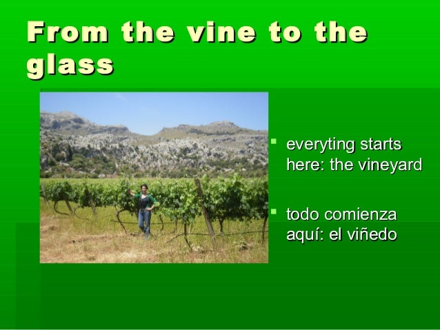 From the vine to theglass               everyting starts                here: the vineyard               todo comienza  ...