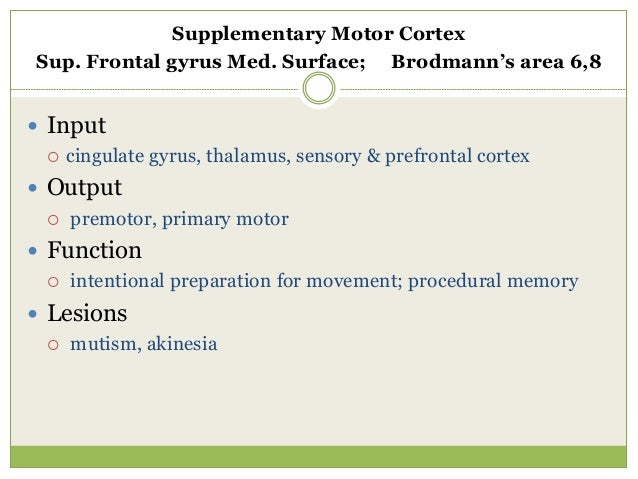 Frontal eye fields Middle Frontal Gyrus; Broadman's area 8  Input  parietal / temporal (ventral = what is target)  post...
