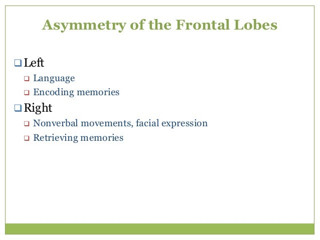Functional Frontal Lobe Anatomy  Five 'frontal sub cortical circuits' 1. Motor 2. Oculomotor 3. Dorsolateral prefrontal 4...