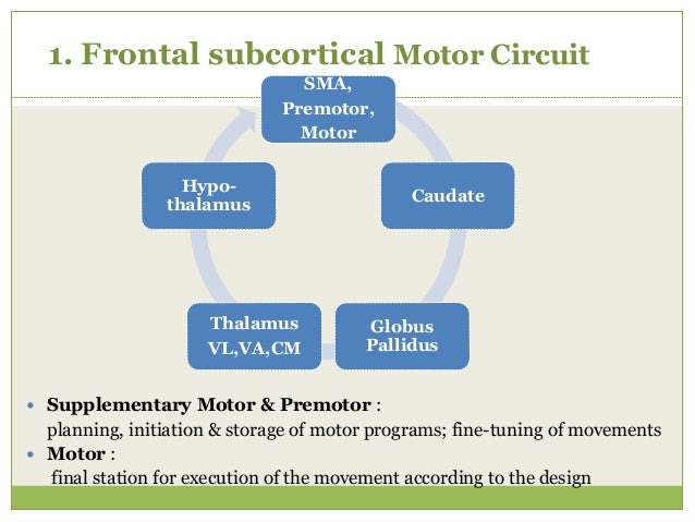 2.Frontal Oculomotor Circuit  Voluntary scanning eye movement  Independent of visual stimuli Frontal Eye field Central C...