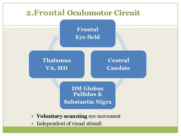 3.Dorsolateral Prefrontal Circuit  Executive functions: motor planning, deciding which stimuli to attend to, shifting cog...