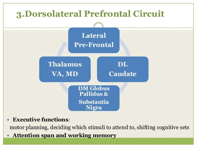 4. Lateral Orbitofrontal Circuit  Emotional life and personality structure Infero- Lateral Pre-Frontal VM Caudate DM Glob...