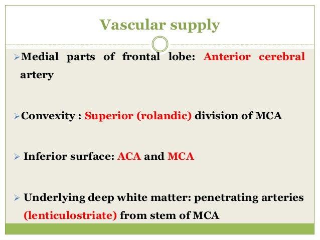 Vascular supply Medial parts of frontal lobe: Anterior cerebral artery Convexity : Superior (rolandic) division of MCA ...