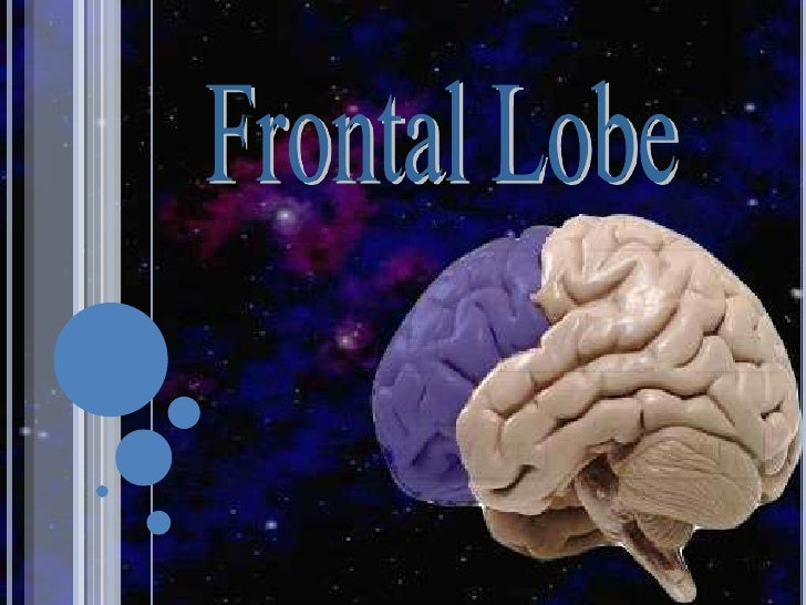 OUTLINE: FRONTAL LOBE       1.   Evolution       2.   History       3.   Anatomy and connections       4.   Syndromes     ...