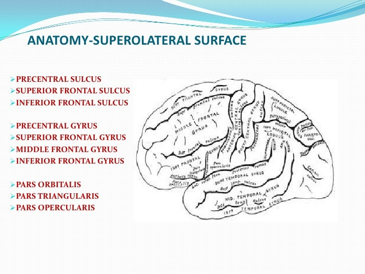 Frontal Lobe Psychiatry Ppt