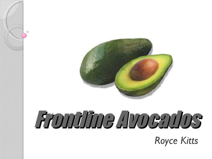 Frontline Avocados Royce Kitts