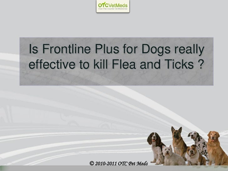 Is Frontline Plus for Dogs reallyeffective to kill Flea and Ticks ?           © 2010-2011 OTC Pet Meds