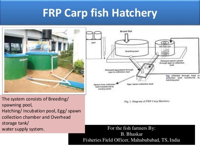 Frp carp hatchery