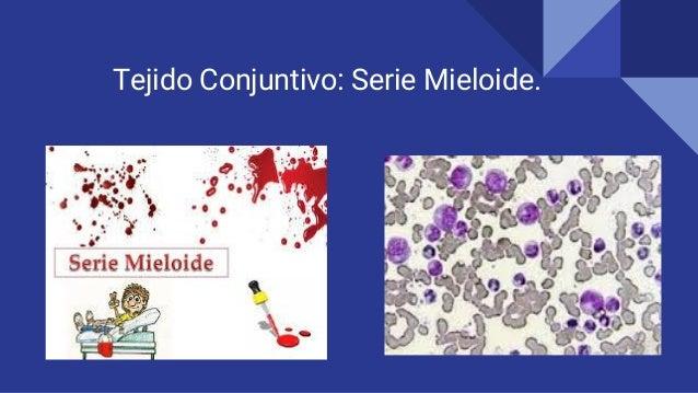 Tejido Conjuntivo: Serie Mieloide.