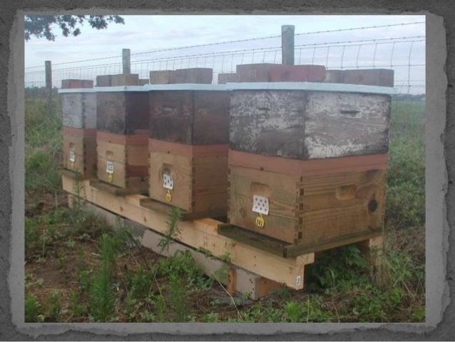 Frugal beekeeper