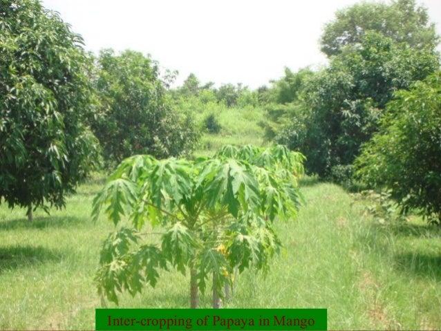 Scenario of Fruit production in Jammu