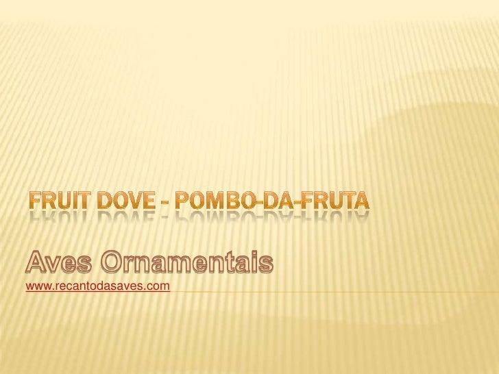 FruitDove - Pombo-da-fruta<br />Aves Ornamentais<br />www.recantodasaves.com<br />