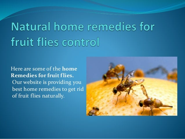 Natural Home Remedies For Fruit Flies Control
