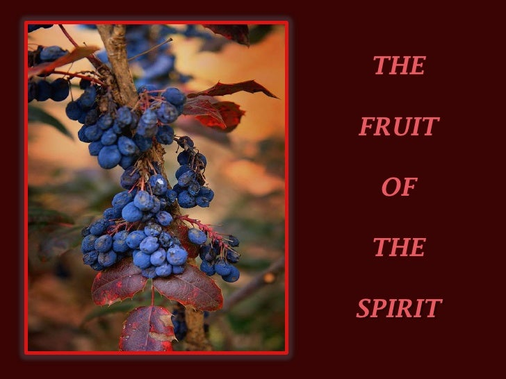 THE <br />FRUIT <br />OF <br />THE<br />SPIRIT<br />