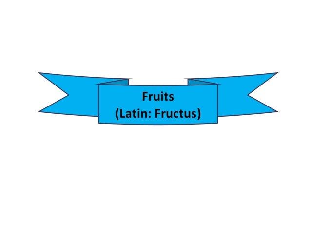 Fruits (Latin: Fructus)